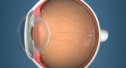 「レンズの穴」って?眼の中の水の流れってどういうこと?
